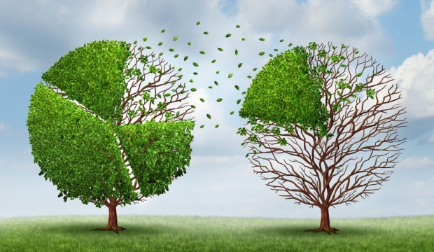 market share illustration with trees