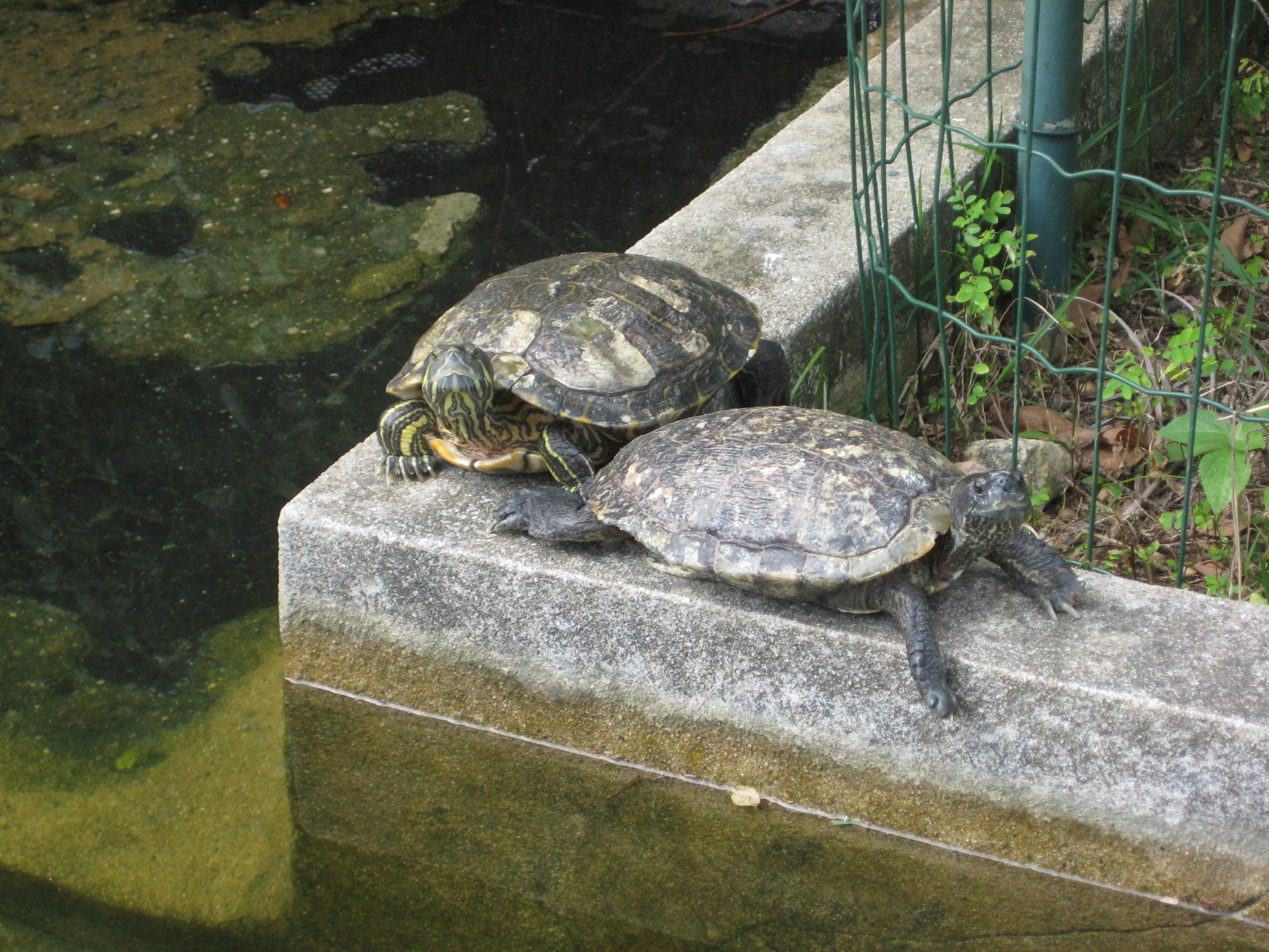 Turtles in botanic garden